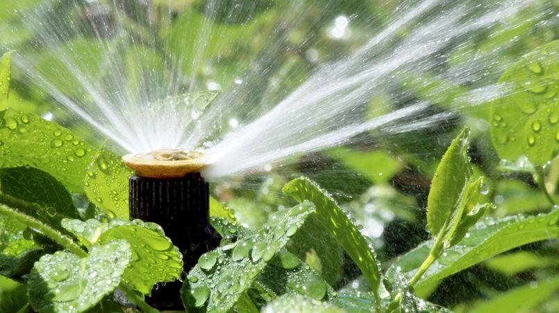 Systemy nawadniania ogrodu. Czy warto w nie inwestować?