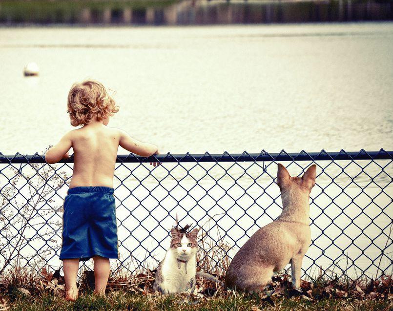 Twoje dziecko chce mieć psa lub kota? Koniecznie TO przeczytaj!