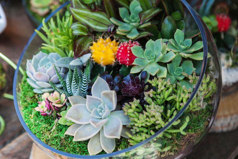 Łatwe w uprawie rośliny doniczkowe. Część I